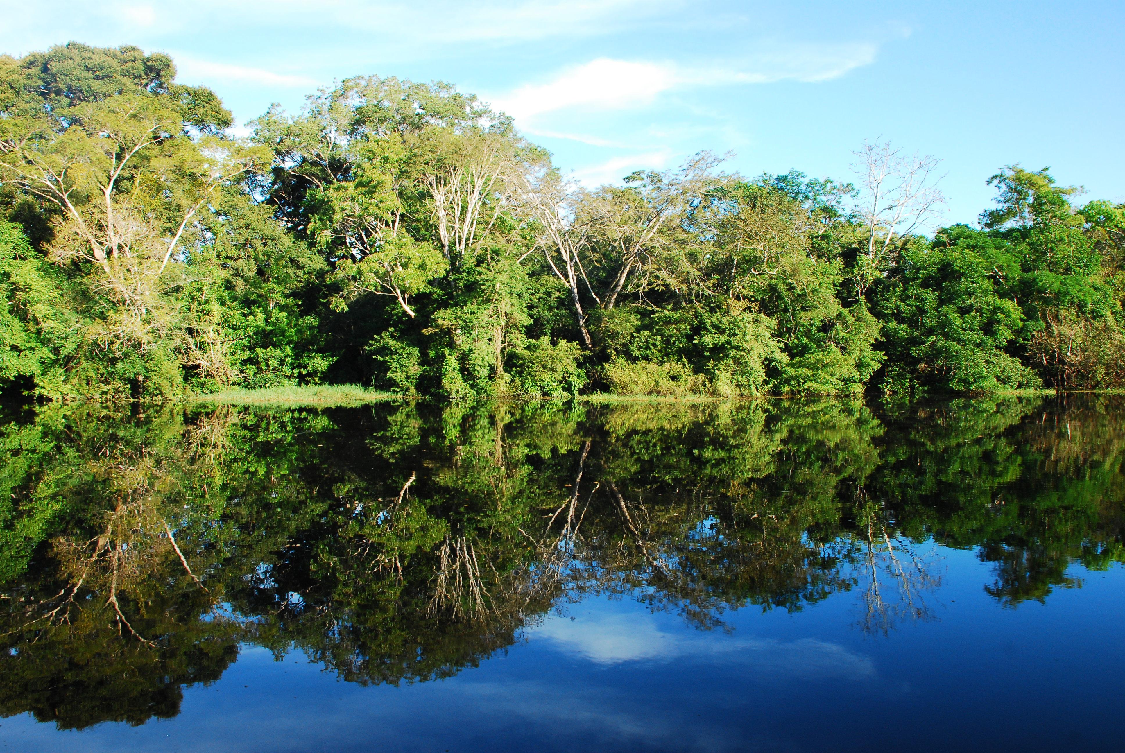 El Reino Unido respalda iniciativas para la protección de bosques y sostenibilidad ambiental en Colombia, a través de la Declaración Conjunta junto con Noruega y Alemania y del Fondo de Biocarbono del Banco Mundial sobre paisajes forestales sostenibles.